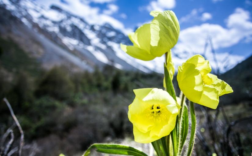 自然摄影/Nature Photography